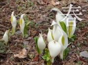 春の裏磐梯