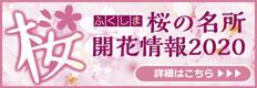 福島県 桜の名所と開花情報2015