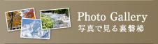 Photo Gallery 写真で見る裏磐梯